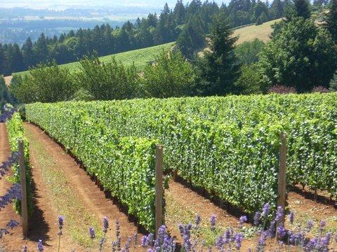 Oregon_2012 064