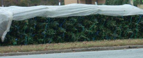 November_2012 008_trees
