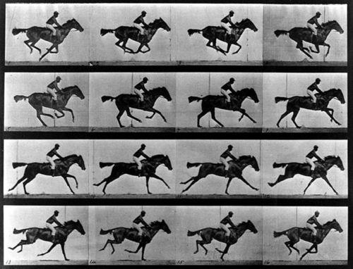 Gallopinghorse