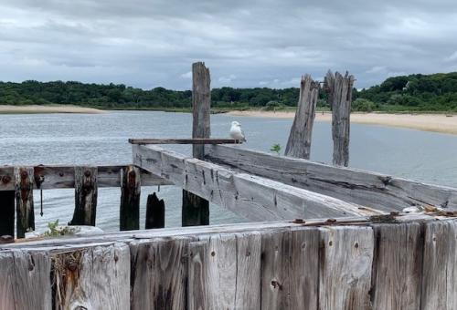 Bird_franzen_shoreline