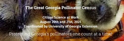 Pollinator_Census